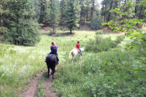 Horseback riding near Sunetha Property Management.