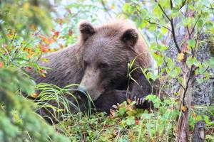 Bear sightings at Deep Creek Fishing Club.