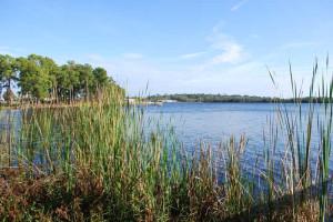 Lake view at Florida Dream Management Company.