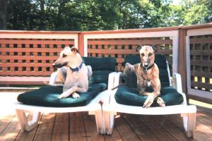 Pets welcome at Inn At Lake Joseph.