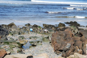 Tide pools at Beachmere Inn.