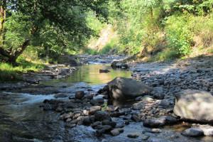 Creek at Glacier Bear Lodge.