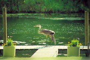 Wild life at Samara Point Resort.