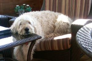 Pet friendly accommodations at Lake Placid Vacation Homes.