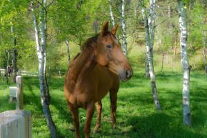 Horse at Newton Fork Ranch.