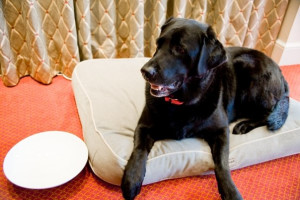 Pets get a dish and bed for their stay at Hotel Commonwealth.