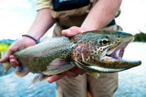 Fishing at Kenai Riverside Lodge.