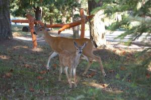 Wildlife at Mayne Island Resort and Spa.