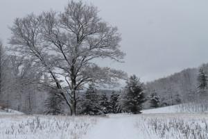 Wintery View at Fairway Inn