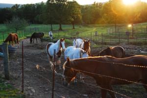 Horses at the ranch at Rockin Z Ranch.