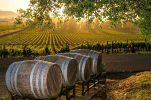 Wineries near Best Western Sonoma Valley Inn & Krug Event Center.