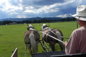 Wagon rides at Gaynor Ranch & Resort.