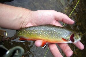 Trout fishing at Harmels Ranch Resort.