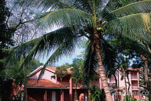 Exterior view of Caribbean Village Playacar.