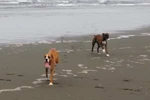 Pet friendly rentals at Redwood Coast Vacation Rentals.