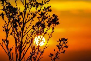 Sunset at Wilderness Resort Villas.