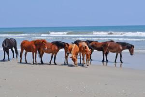 Wild horses on beach at Beach Realty & Construction.