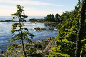 Island shoreline as seen from Wild Pacific Trail just minutes from Sutton Cottage.