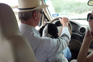 Pets welcome at Cibolo Creek Ranch.