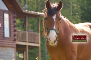 Horseback riding at Watershed Cabins.