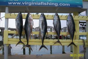 Virginia Beach Fishing Center near Best Western PLUS Oceanfront Virginia Beach.