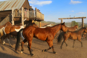 Horses at Black Mountain Ranch.