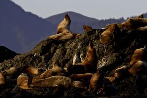 Seals at Long Beach Lodge Resort.