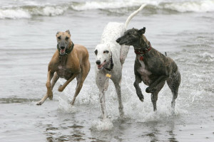 Pet friendly beaches at Seabrook Cottage Rentals.
