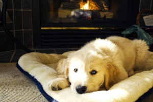Pet friendly accommodations at Wickaninnish Inn.