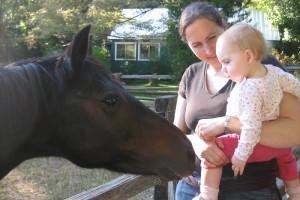 Horse at Ripple Creek Cabins.