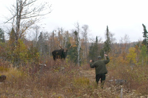 Moose watching at Gunflint Lodge.