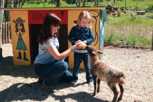 Feeding goat at Elk Mountain Ranch.