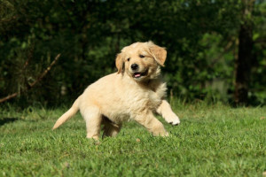 Pets welcome at Hill Country RV Resort & Cottage Rentals.