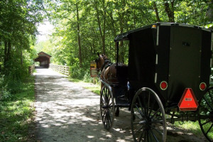 Buggy ride at Sunset Ridge Log Cabins.
