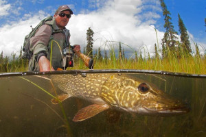 Northern pike fishing at Alaska Trophy Adventures Lodge.