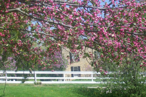 Spring at The Cothren house