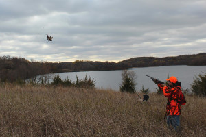 Shooting pheasant at Viking Valley Hunt Club.