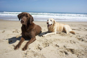 Pets welcome at Sandbridge Realty.