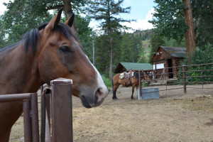 Horse at Shoshone Lodge & Guest Ranch.