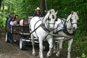 Wagon ride at Rocking Horse Ranch Resort.