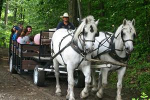 Wagon ride at Rocking Horse Ranch Resort.
