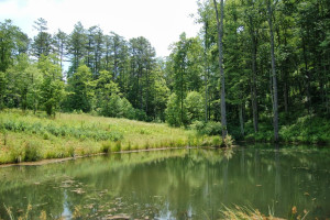 Fishing pond at Cuddle Up Cabin Rentals.