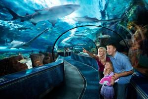 Aquarium near Forest Dunes Ocean Front.
