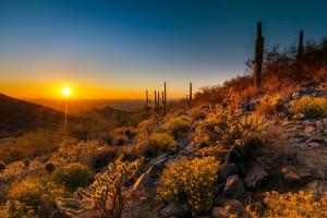 Beautiful scenery at SkyRun Vacation Rentals - Scottsdale, Arizona.
