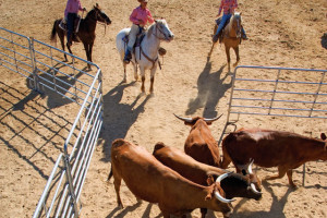 Ranch activities at Rancho De Los Caballeros.