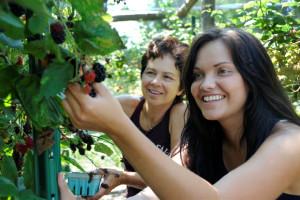 Picking berries at the farm at Buttermilk Falls Inn & Spa.