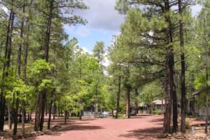 Beautiful Scenery at Buck Springs Resort