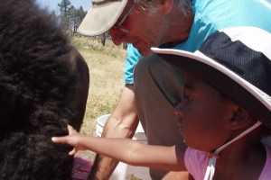 Bison interaction at Bisonquest Wildlife Vacations.