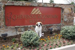 Dog-friendly Cheyenne Mountain Resort.