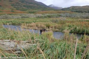 Grizzly bear near Alaska's Kodiak Island Resort.